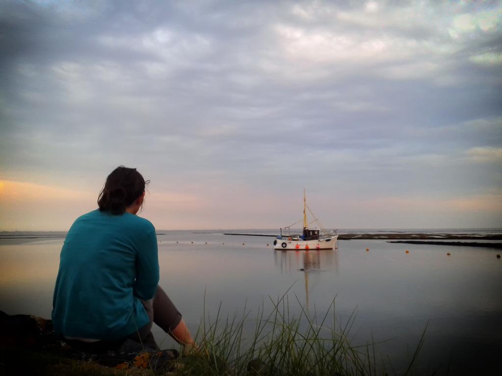Seehunde vor der Küste in Vollerwiek
